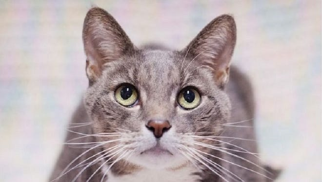 Adopt an adult cat or dog for free at Williamson County Animal Center this weekend.
