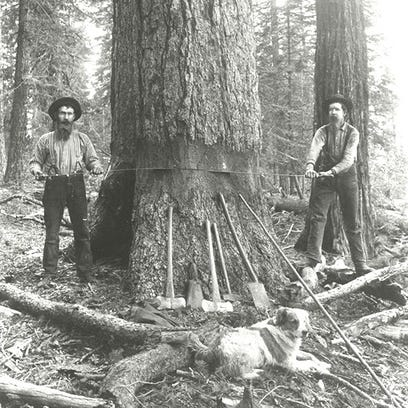 Jeff Reed, left, and John Hansel whipsaw a tree circa