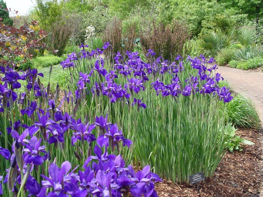 Tall iris are key to creating the illusion of water