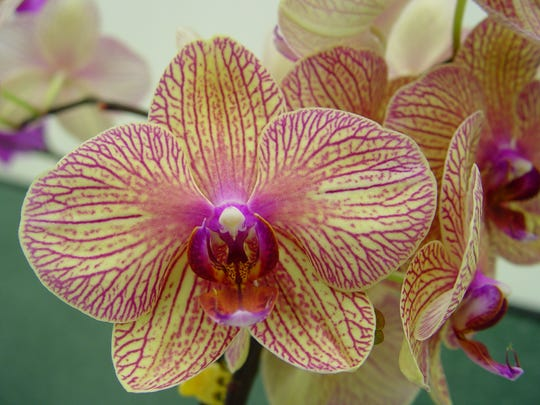 Rehabilitate suffering orchids by bringing them into