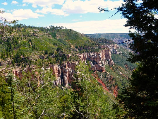 The North Kaibab drops steeply through the forest into