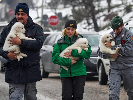 Rescue team members carry the three puppies found alive