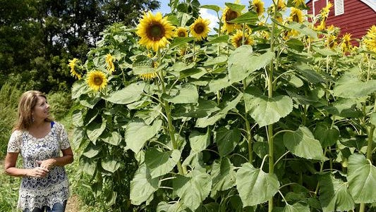 The O'Keefe family sells sunflower bouquets to benefit Make-A-Wish Minnesota