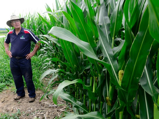 Farmer Jerry Cunningham surveys his corn crop at his