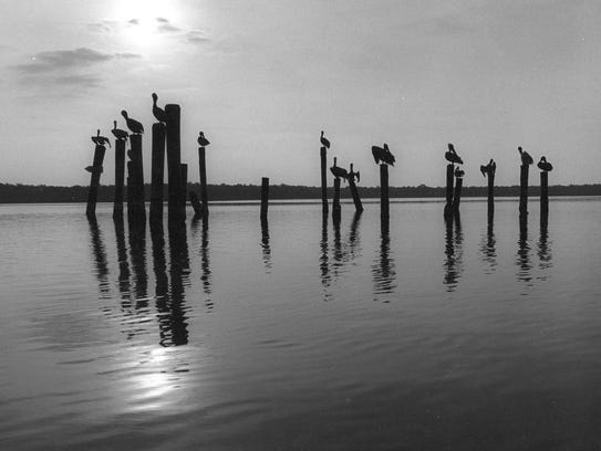 """Pelicans Poles"" by the late Sanibel photographer Charlie"
