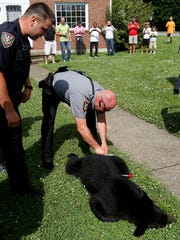 tranquilized black bear in Roanoke, Va.