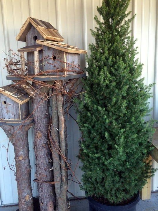 Year round joy grow a living christmas tree for Year round christmas tree