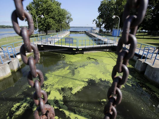 Algae covers the water in the Menasha lock Monday.