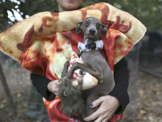 "Twiggy, an Italian greyhound in a ""pizza rat"" costume,"