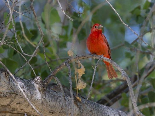 Western Rivers Bird Count