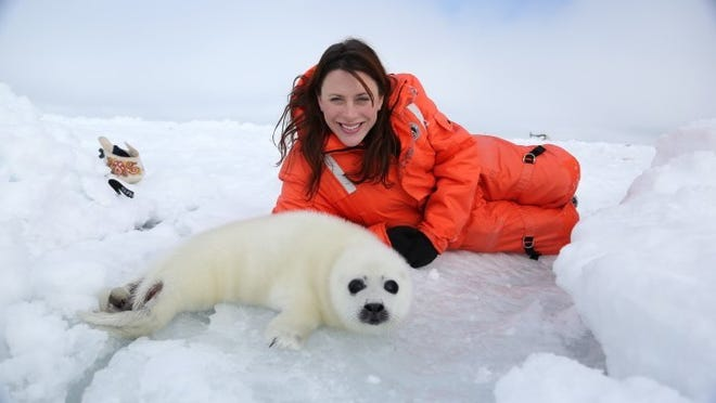 Jessica Posiask with a harp seal in the Gulf of St. Lawrence, Canada.