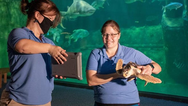 Education programs at the N.C. Aquarium at Pine Knoll Shores will continue virtually as the aquarium reopens to visitors Monday after beinng closed temporarily during the coronavirus pandemic. North Carolina Aquariums are reopening at half capacity with ongoing precautions taken to help prevent the spread of COVID-19.