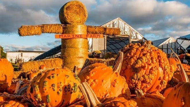 Marini Farm in Ipswich is one of many area farms that have been forced to adopt new regulations this harvest season due to the ongoing pandemic.