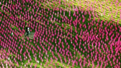 """A woman and her young child walk through a """"mini-field"""