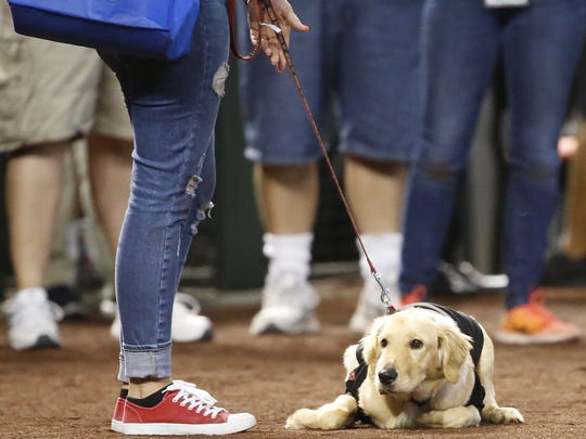 Paula Godwin holds Todd the dog, who went viral after saving his owner by getting between her and a rattlesnake, at Chase Field in Phoenix on July 8, 2018.