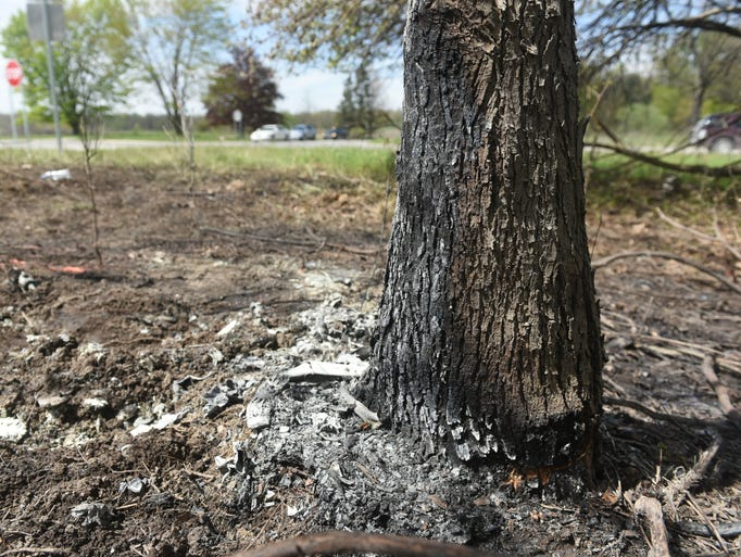 A burned tree and brush are seen near the intersection