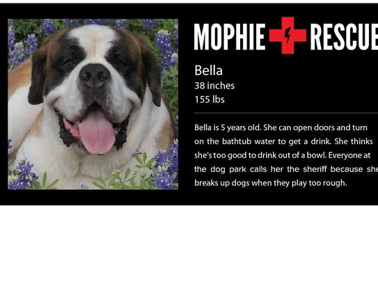 A Mophie St. Bernard rescue dog that will take Mophie