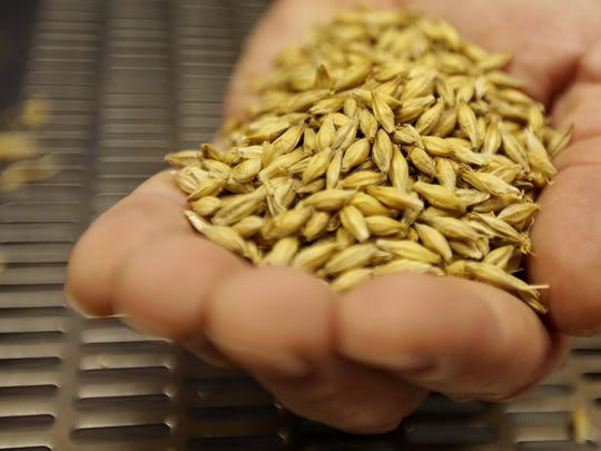 Tom Laboda who started MotorCity MaltHouse with Dan Bailey holds some single source malting barley at their facilities in Shelby Township on Monday, Dec. 21, 2015.