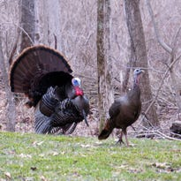 Spring is coming, and with it turkey season on Delmarva