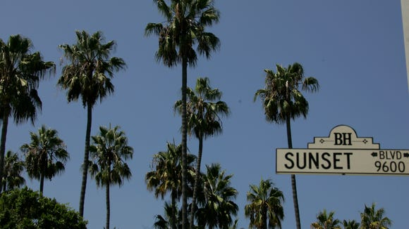 XXX PALMTREES  SUNSET BLVD  RH2835.JPG CA