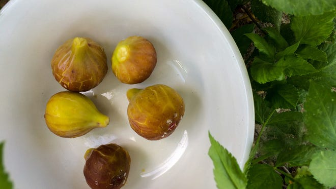 All about figs.