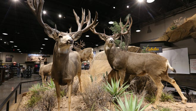Cabela's has several taxidermy scenes throughout the store.