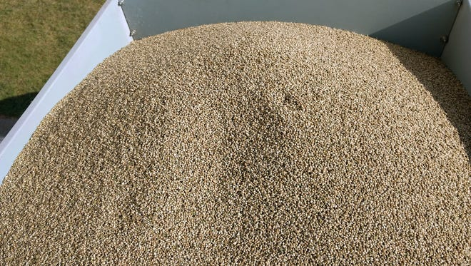 Wisconsin farmers are waiting for the Department of Agriculture, Trade and Consumer Protection to create regulations on for those who want to grow industrial hemp. The grain market is the biggest market for industrial hemp right now.