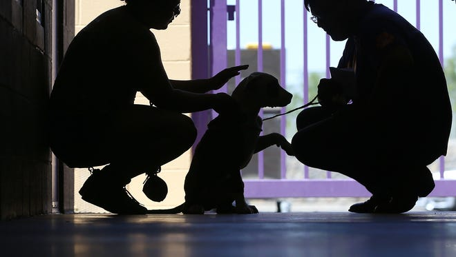 Looking for a new friend? Find one for only $2 at El Paso Animal Services through Labor Day.