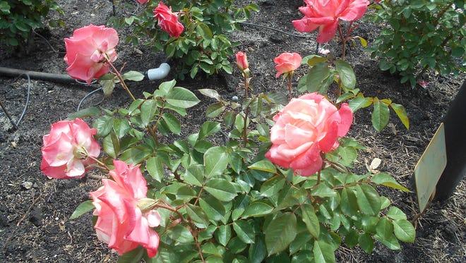 It's always spring with fresh blooms at Bellingrath Gardens.