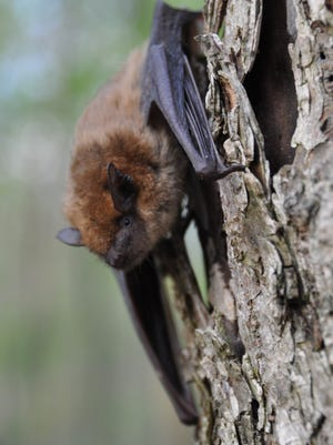 Health officials said an incident between a bat and a pet in St. Lucie County has led to a rabies advisory for the area.