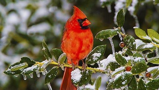Ken Jenkins will present a program on bird photography on Saturday, Dec. 17.