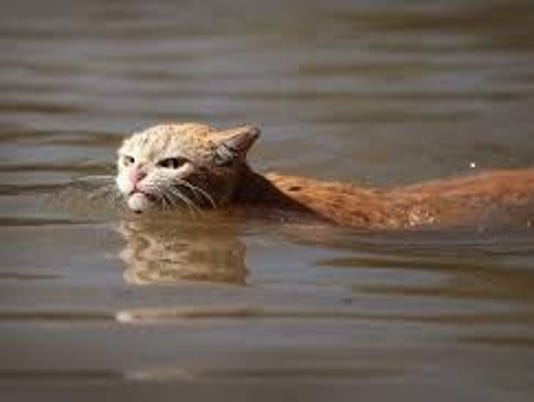 0920-YNMC-miserable-cat-after-hurricane-harvey.jpg