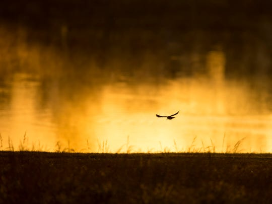 A Red-Winged Blackbird is silhouetted against the lake