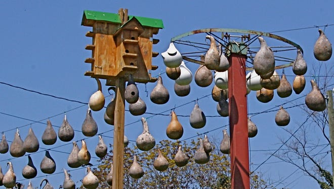 A wood martin house with multiple compartments, gourd lines strung with natural gourds and a spoked wheel with a mix of homegrown natural and modern white plastic gourds provide housing at Andy and Pat Whiteside's Blount County purple martin colony.