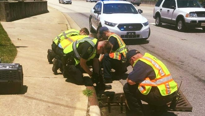 The Asheville Police Department and Asheville Fire Department saved a 4-week-old kitten from a storm drain Wednesday outside of Biltmore Estate in Asheville.