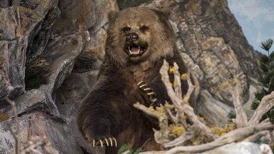 The bear that once killed a man was on display in Hobby Land.
