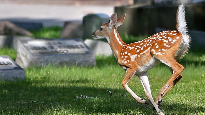 A deer terrorized an Indiana restaurant Monday morning.