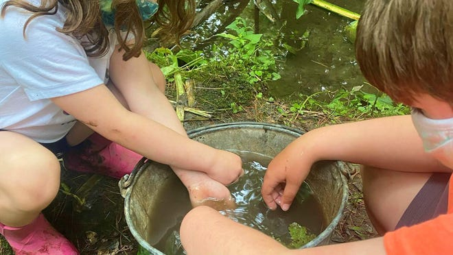 Students in Dawn Jenkins' Eyes of the World Nature Immersion program engage in activities this summer.