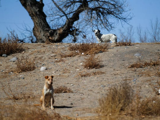 A pair of dogs take a break on Monday at Nizhoni Park in Shiprock.