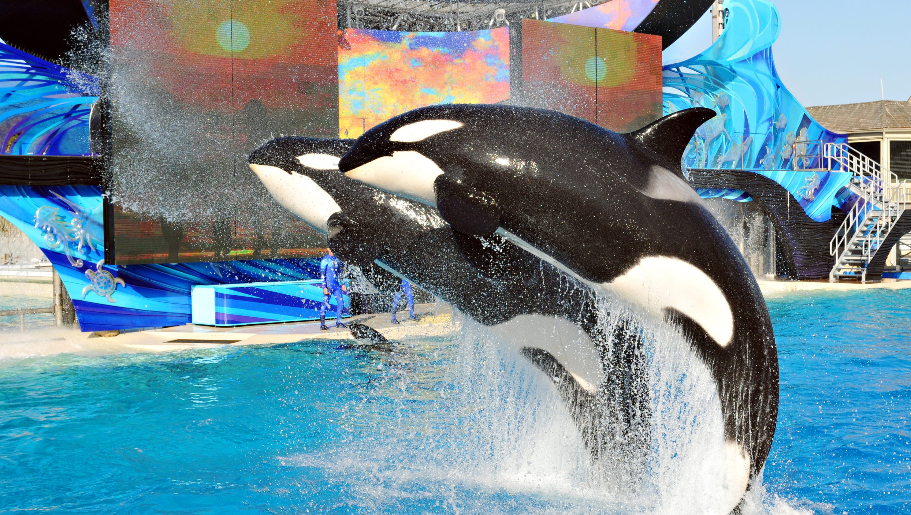 sea world Five seaworld and busch gardens theme parks are offering free admission to  military retirees and veterans, along with up to three guests, from.