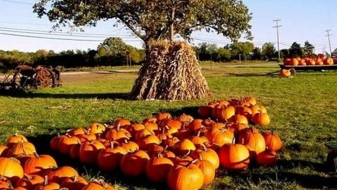 """The fall """"Pumpkin Patch"""" outing at the Henschel farm is from 10 a.m. to 4 p.m., Saturday Oct. 7, and Sunday Oct. 8."""