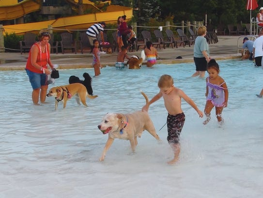 Dogs and their owners play in the pool at Cool Waters