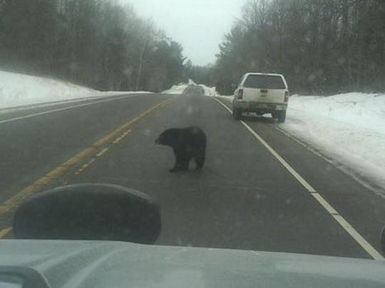 A small black bear was spotted wandering in and out