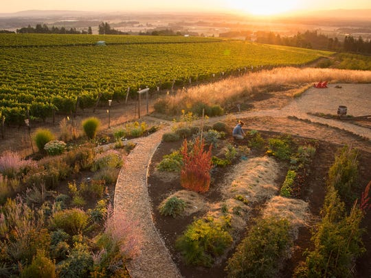 While Brooks Wine makes Pinot Noir (you must, to survive),