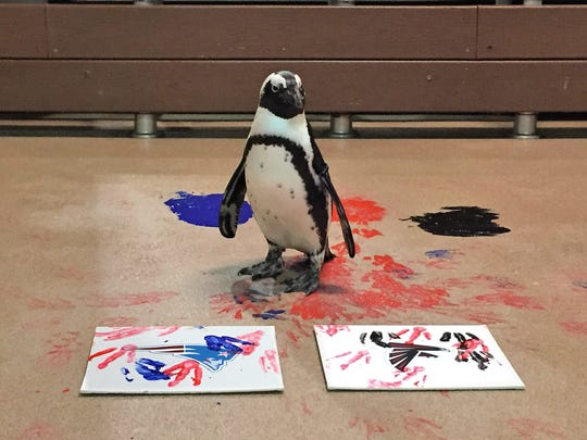 Check out opportunities from penguin encounters to original penguin artwork at the Newport Aquarium.