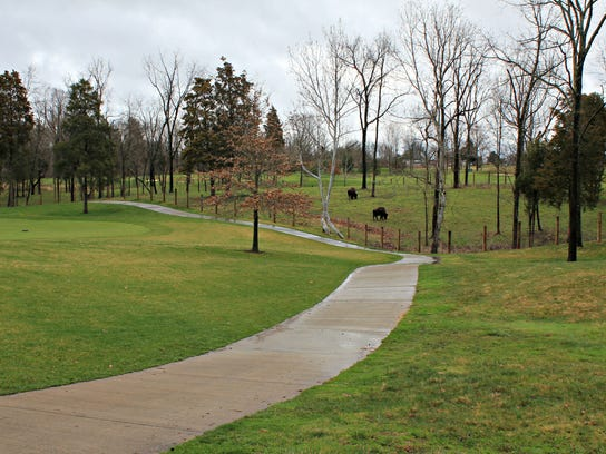 Duff and Divot live in a 4 1/2 acre pen between the
