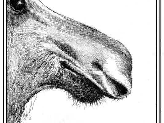 Moose_nose.jpg