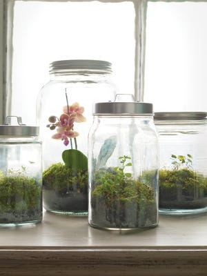 You can create and maintain a beautiful terrarium using everyday objects you may already have on hand.