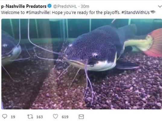 Predators get catfish fish tank for nhl playoffs that 39 s for Fish tank catfish