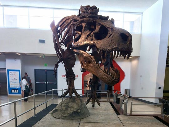 A 42-foot-long T. Rex named Sue makes an exhilarating welcoming committee at the Discovery Museum through January 2018.